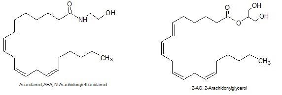 Endocannabinoide