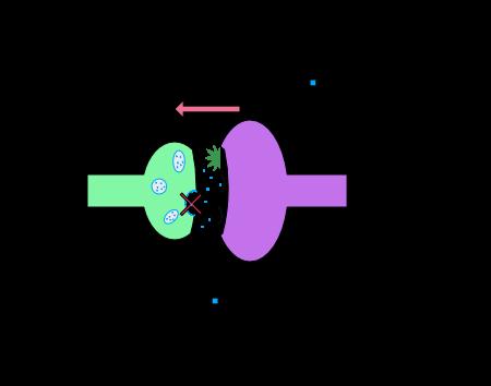 funktion endocannabinoide