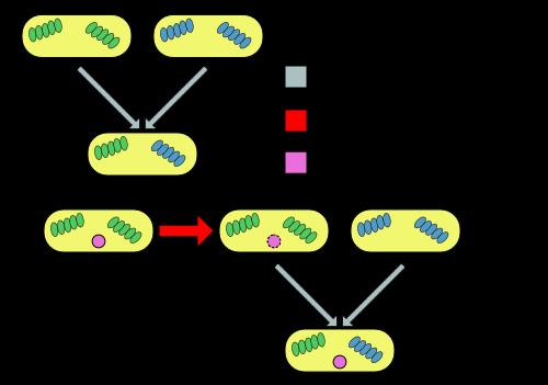 vertikal_horizontal_Gentransfer